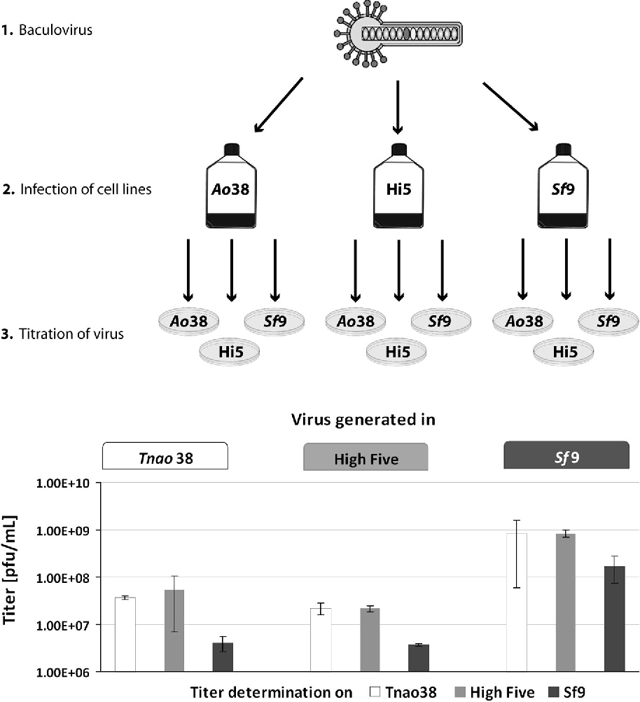 Figure 1 from Tnao38, high five and Sf9—evaluation of host