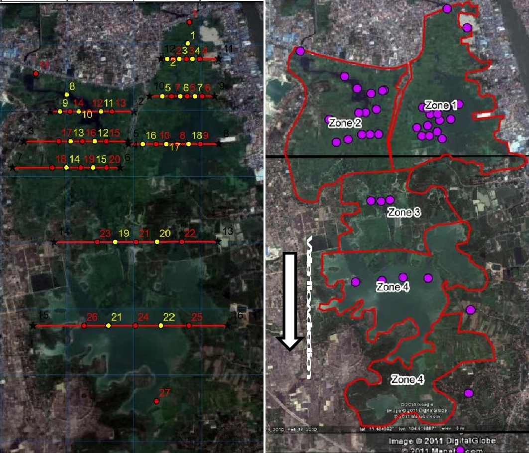 Fig. 4. Pre-determined transects for sampling sites (Left) and actual sampling sites (purple dots) for E. coli and detergents in Boeng Cheung Ek