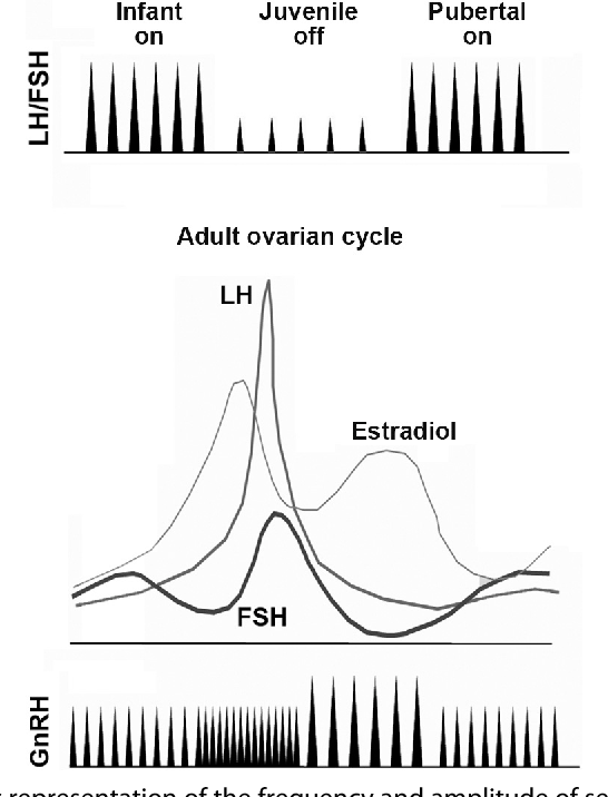 Figure 3 from GnRH in the Human Female Reproductive Axis