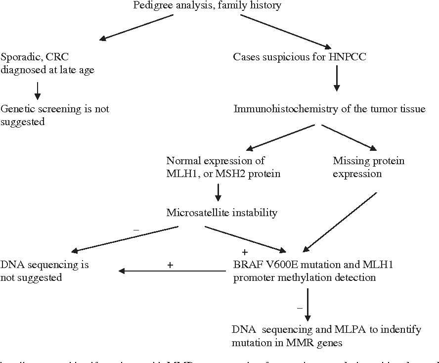 Figure 1 From Mlh1 And Msh2 Mutation Screening In Hnpcc Families Of Hungary Two New Mmr Gene Mutations Semantic Scholar