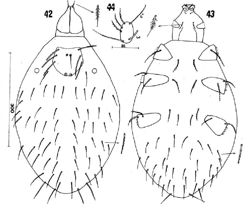 figure 42-44