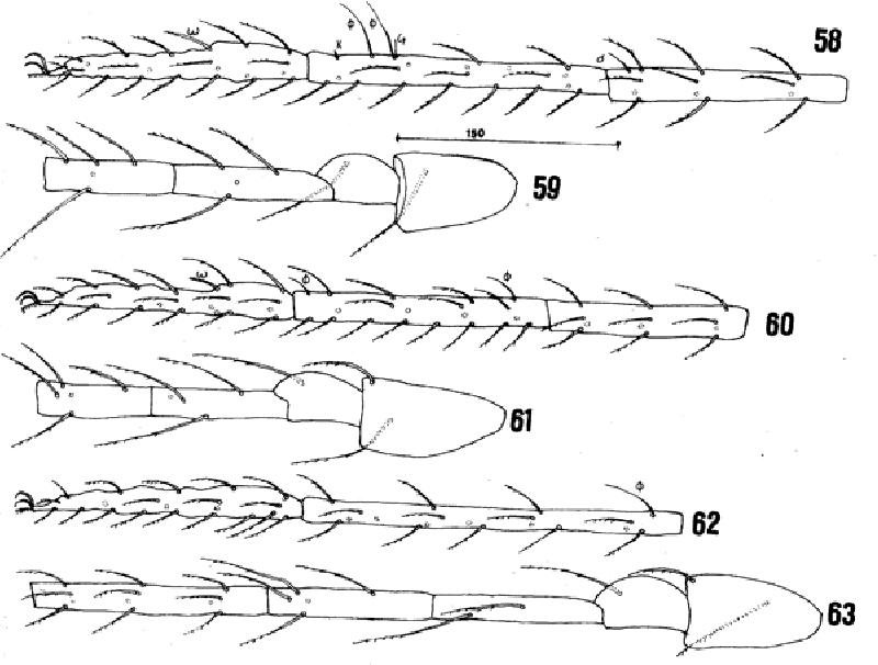 figure 58-63