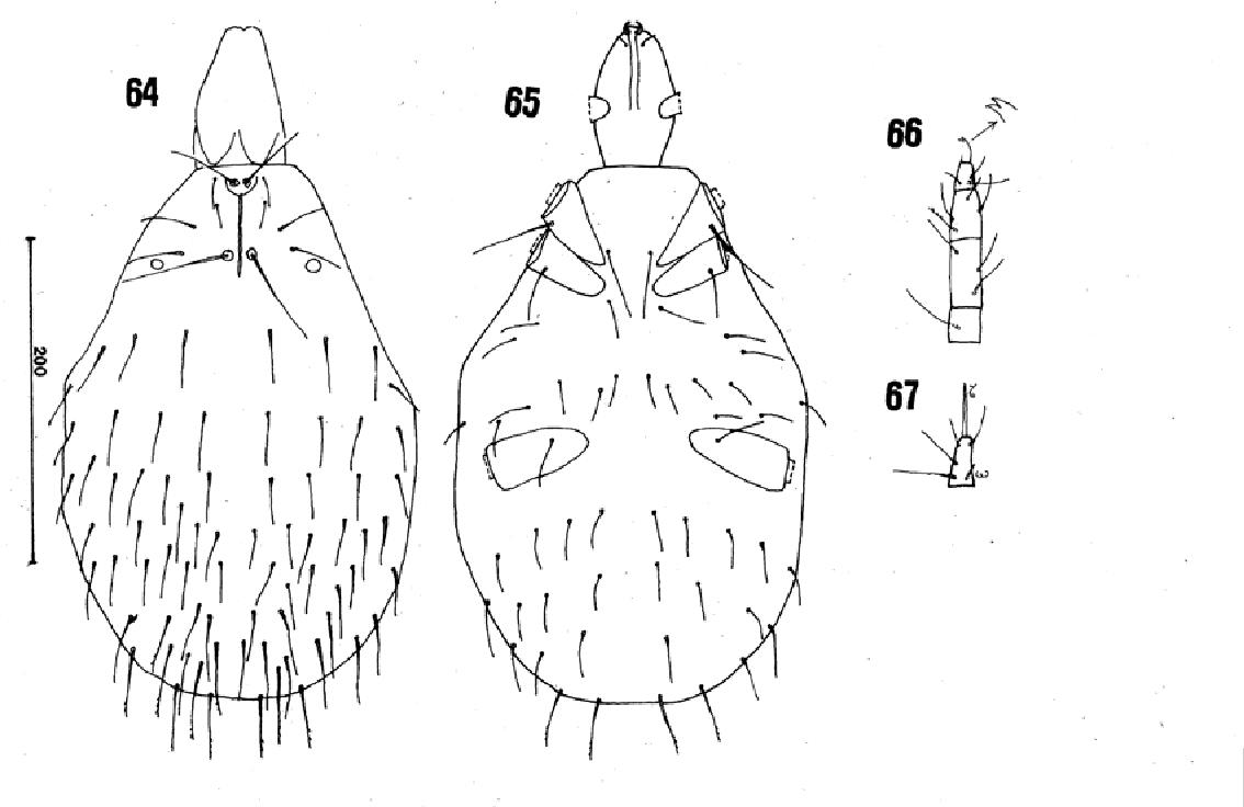 figure 64-67
