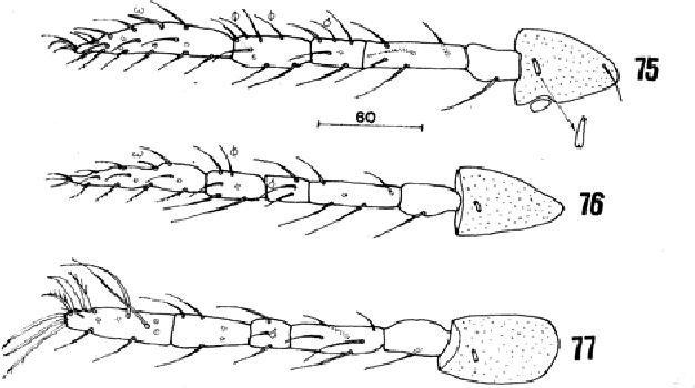 figure 75-77