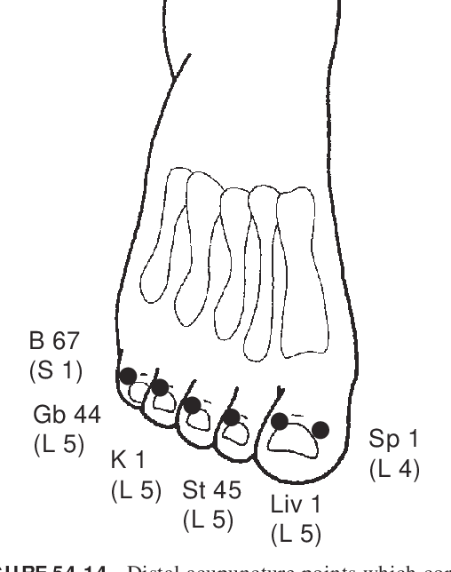 Figure 54 14 from ETPS Neuropathic Acupuncture 54 - Semantic