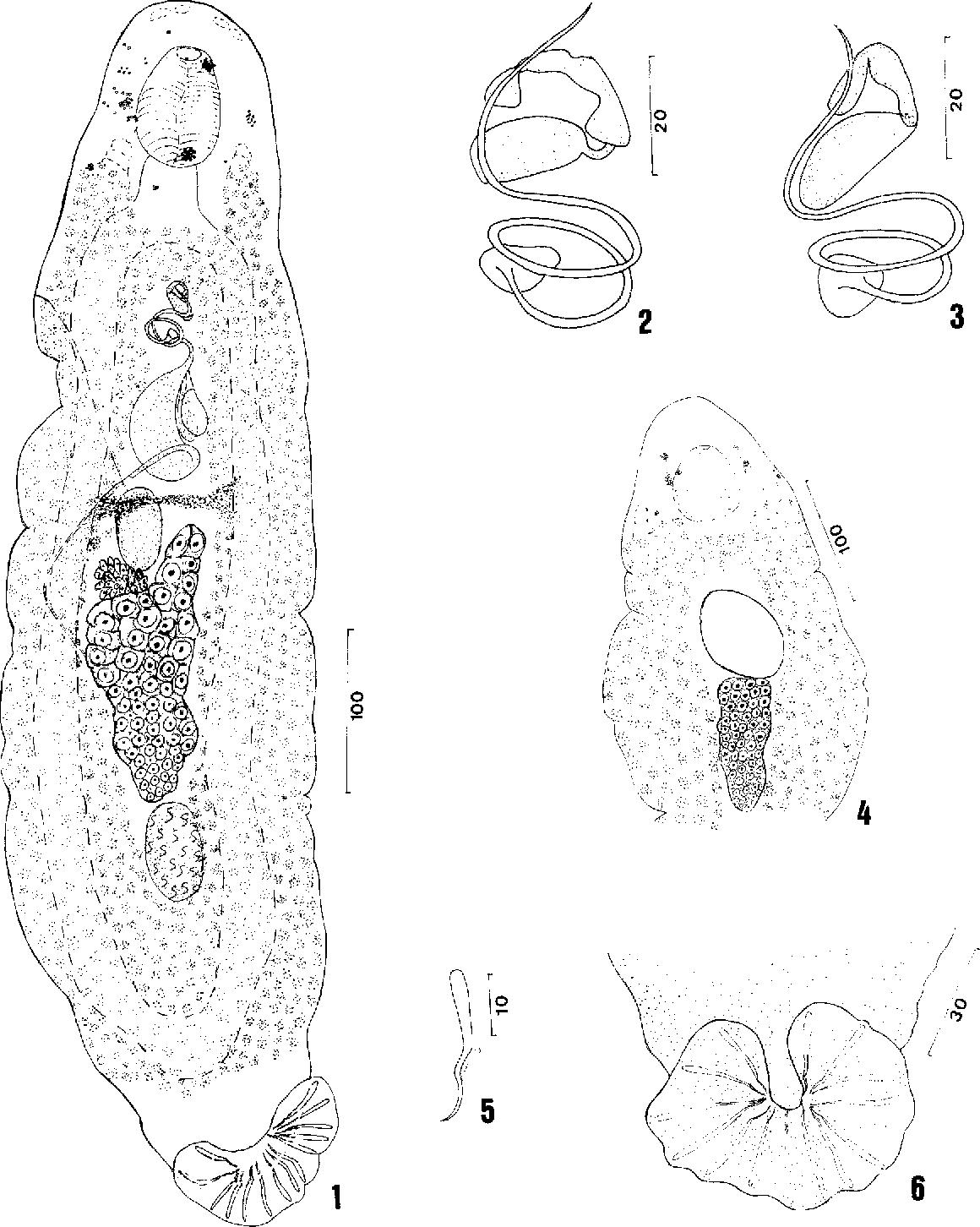 figure 1-6