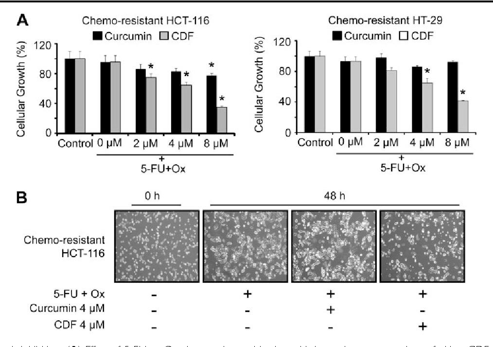 Figure 2 From Difluorinated Curcumin Cdf A Novel Curcumin Analog Is A Potent Inhibitor Of Colon Cancer Stem Like Cells Semantic Scholar