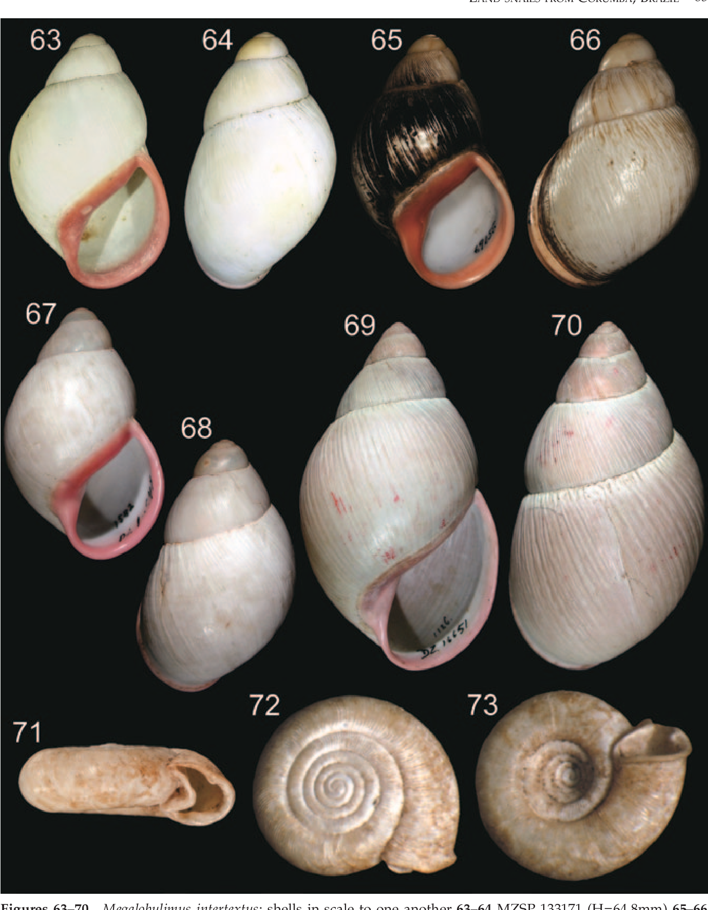 figure 63–70