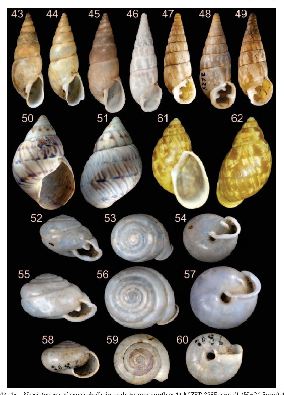 figure 43–45