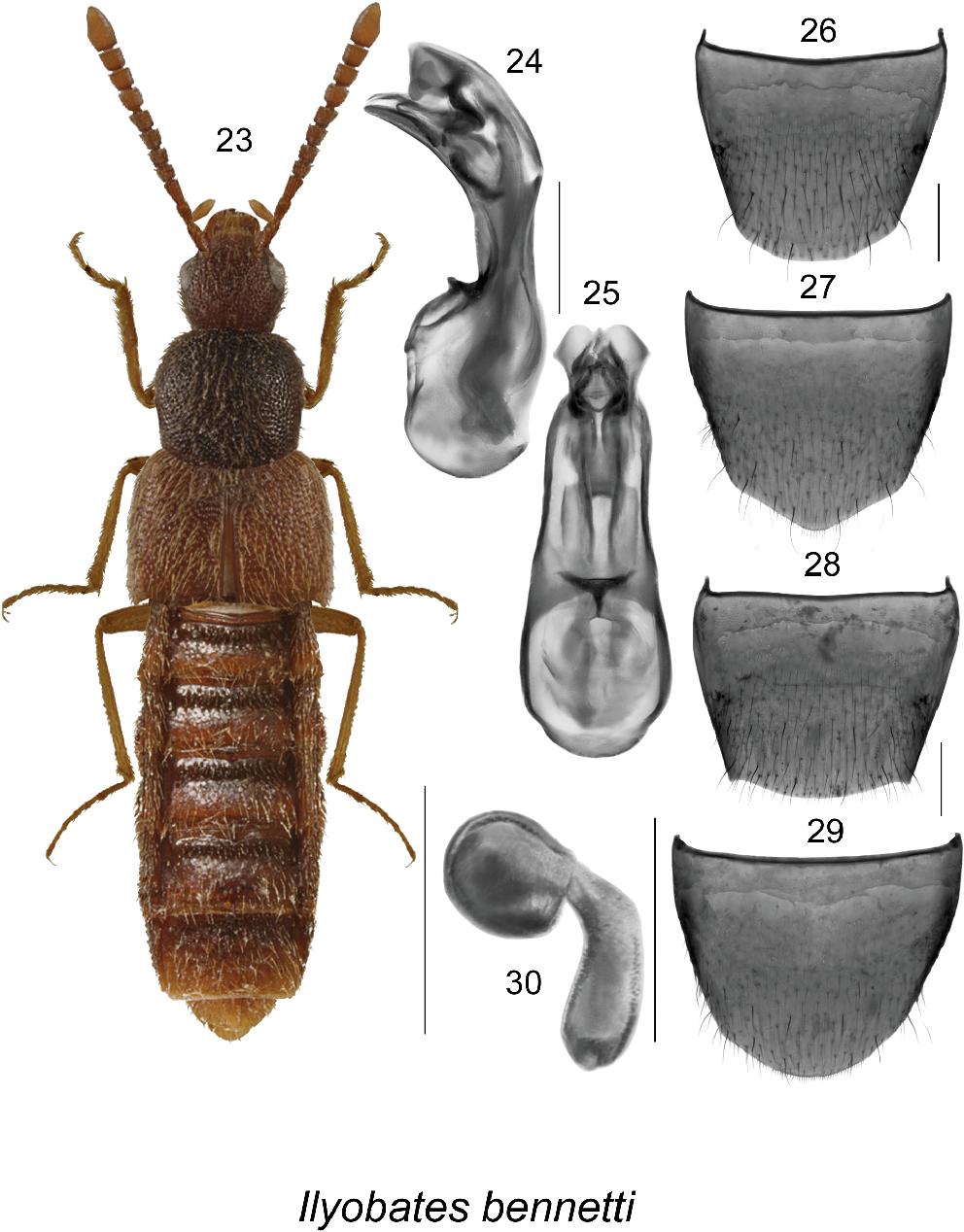 figure 23–30