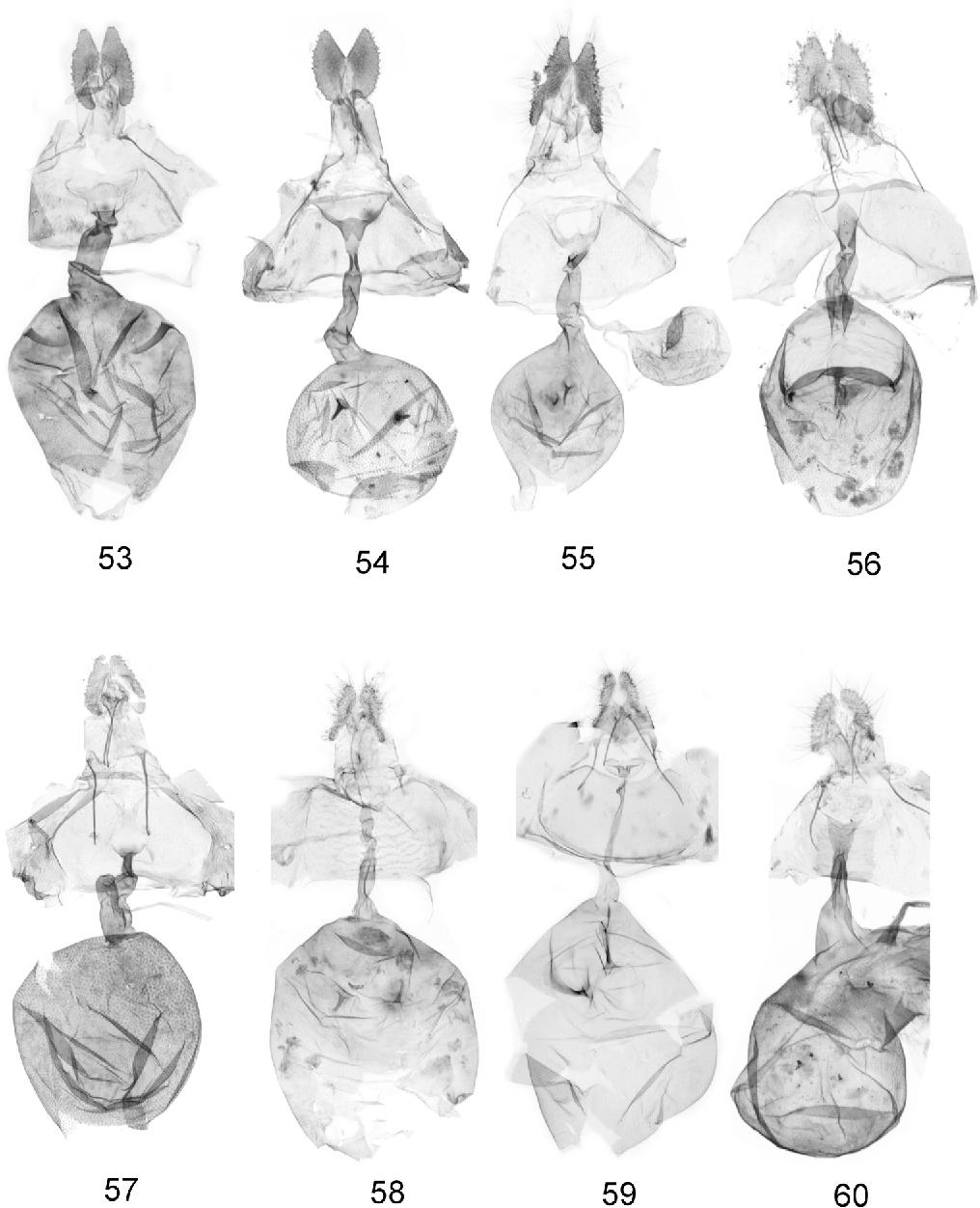 figure 53-60