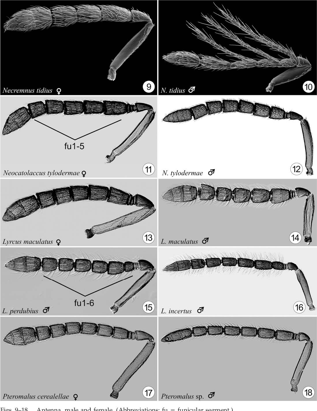 figure 9–18