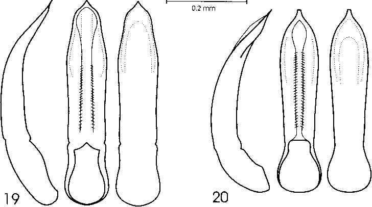 figure 19-20