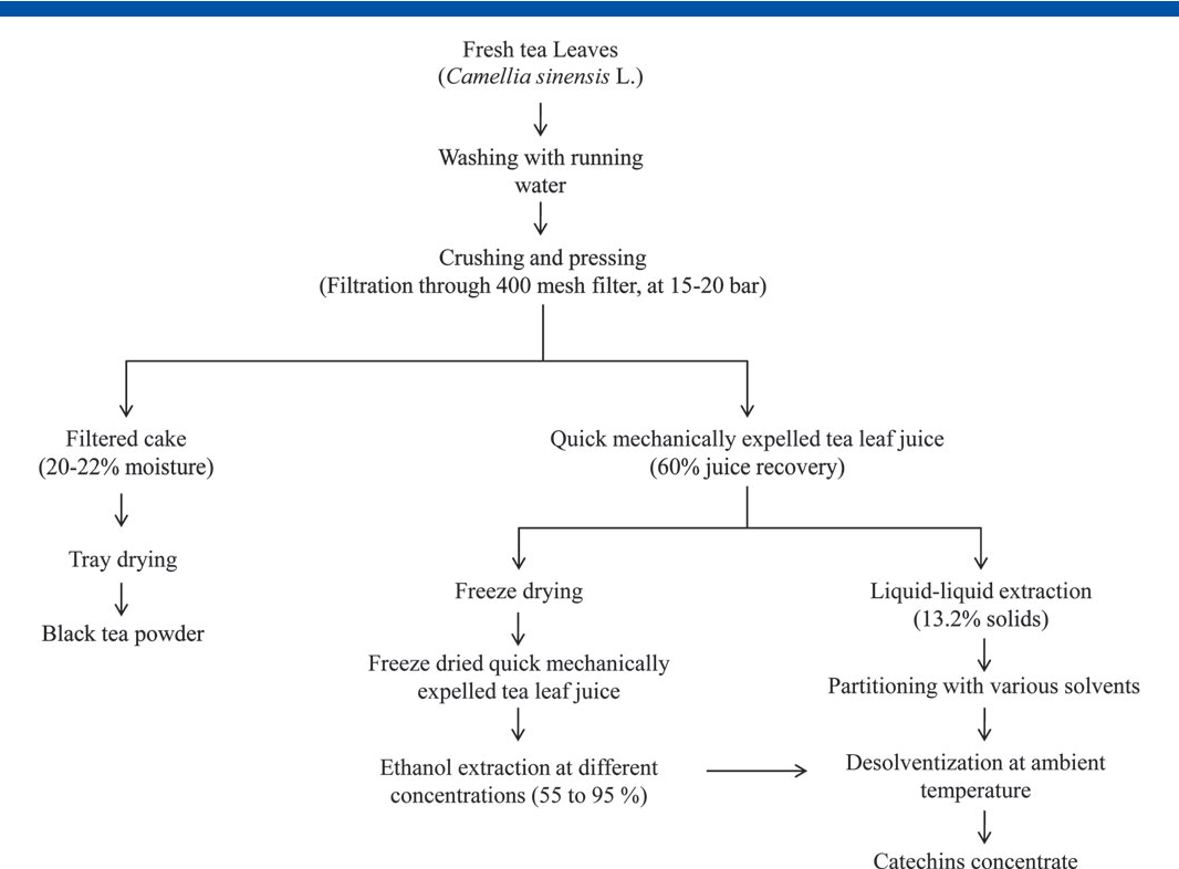 Figure 1 From Catechin Concentrates Of Garden Tea Leaves Camellia Sinensis L Extraction Isolation And Evaluation Of Chemical Composition Semantic Scholar