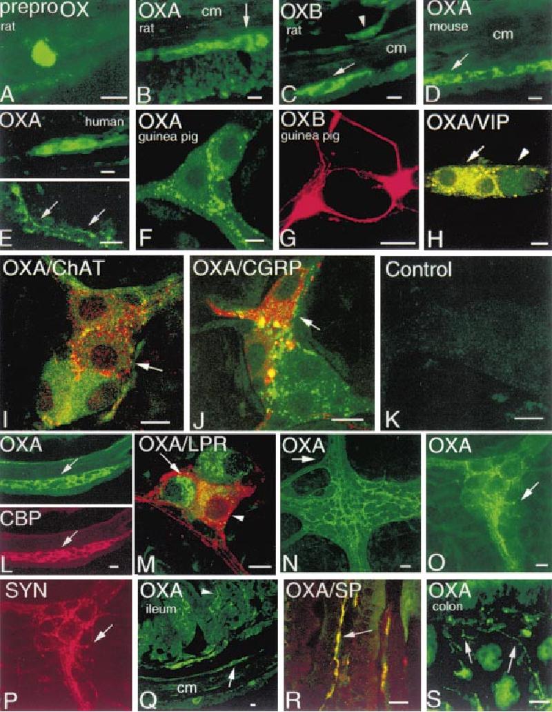 Chat oxb Oxford Biomedica