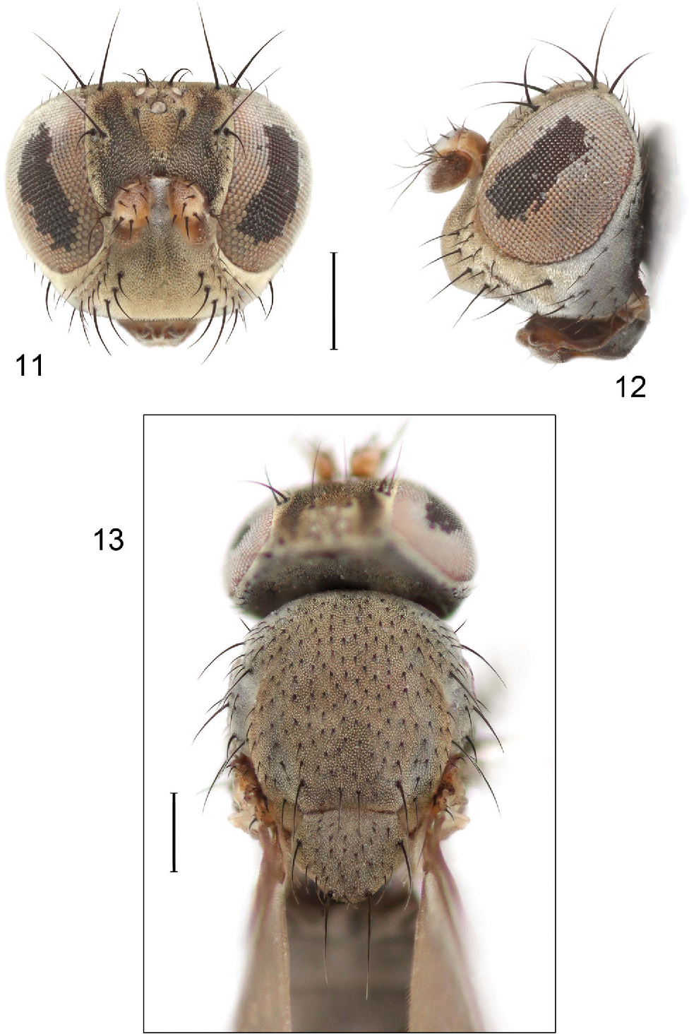 figure 11–13