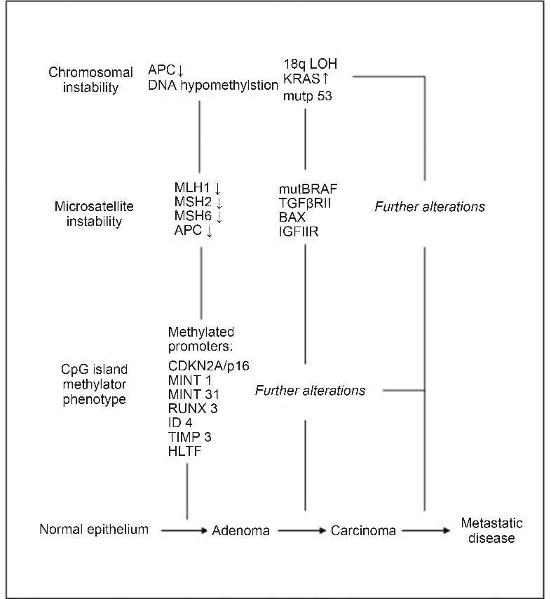 Colorectal Cancer Carcinogenesis A Review Of Mechanisms Semantic Scholar