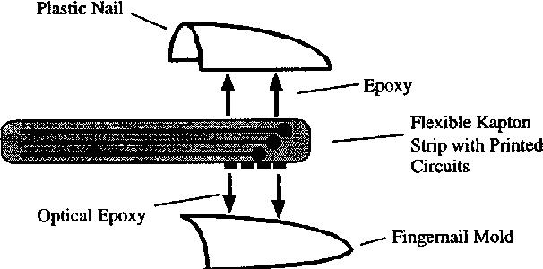 Photo-plethysmograph nail sensors: for measuring finger