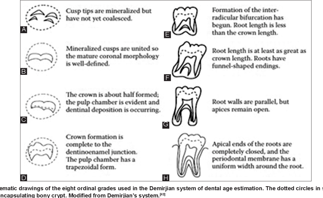 Teeth In Forensics A Review Semantic Scholar