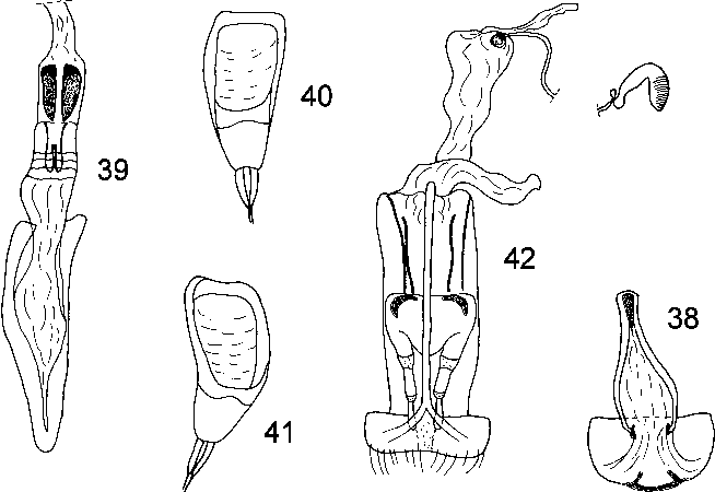figure 38–42