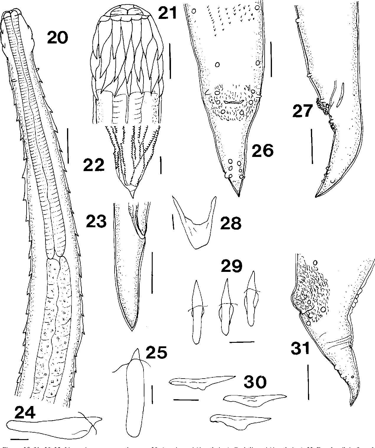 figure 20–31