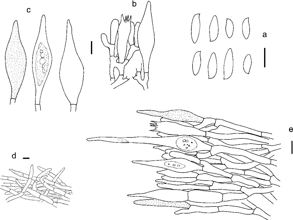 figure 99