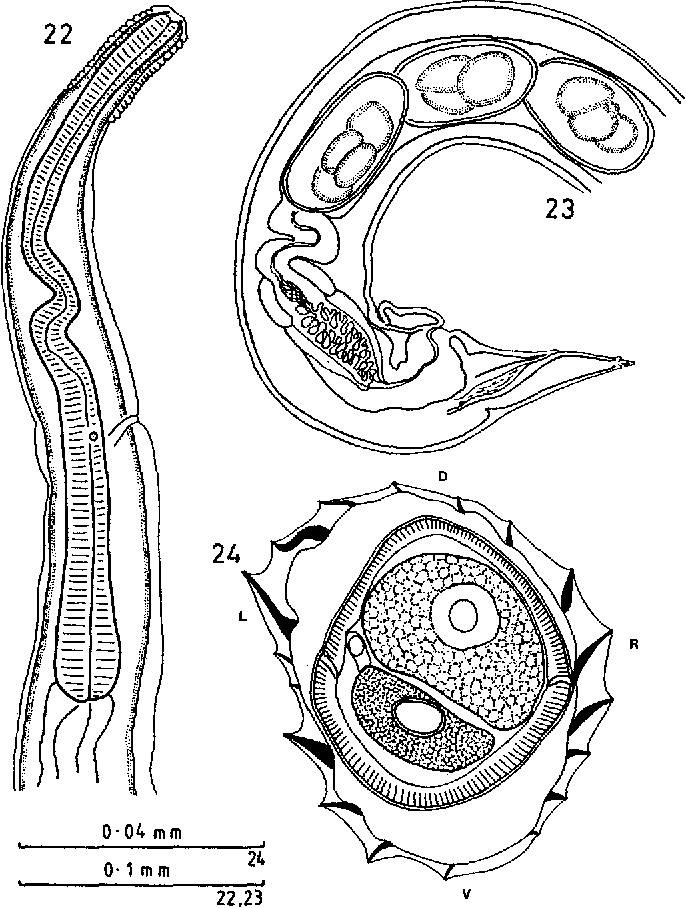 figure 22-24