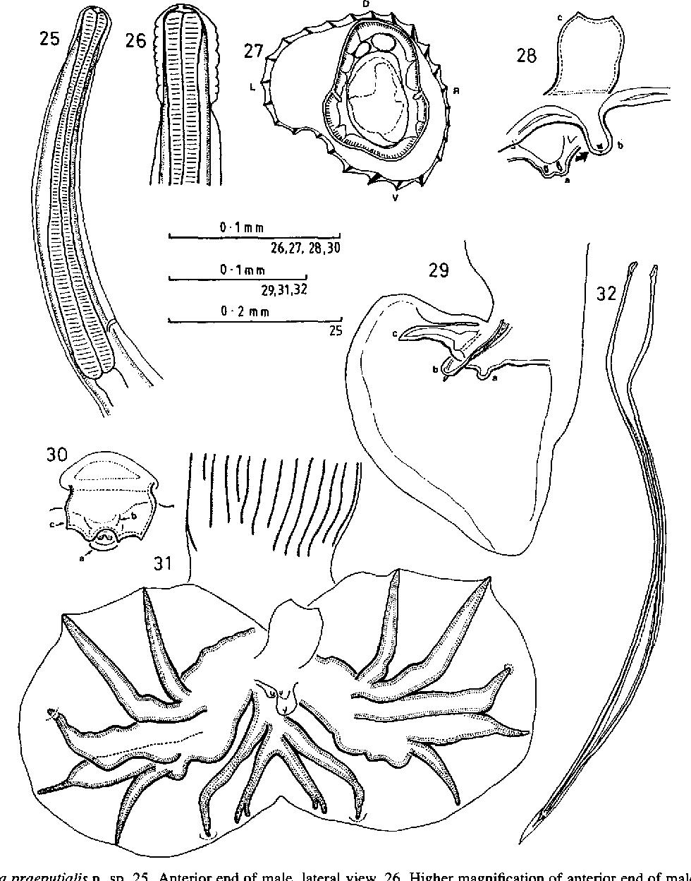 figure 25-32