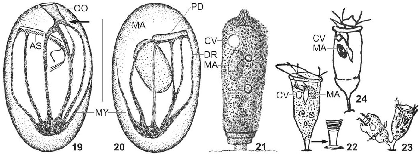 figure 19–24