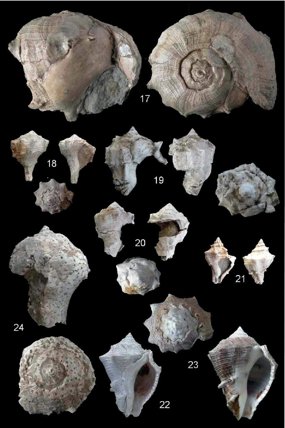 figure 20-21