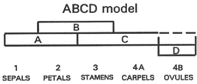 figure 24.5