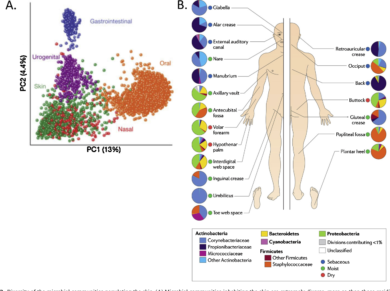 Figure 2 from Functions of the skin microbiota in health ...