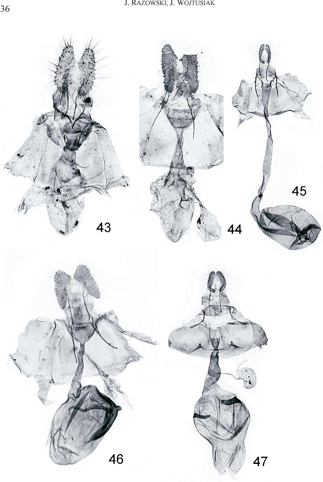 figure 43-47