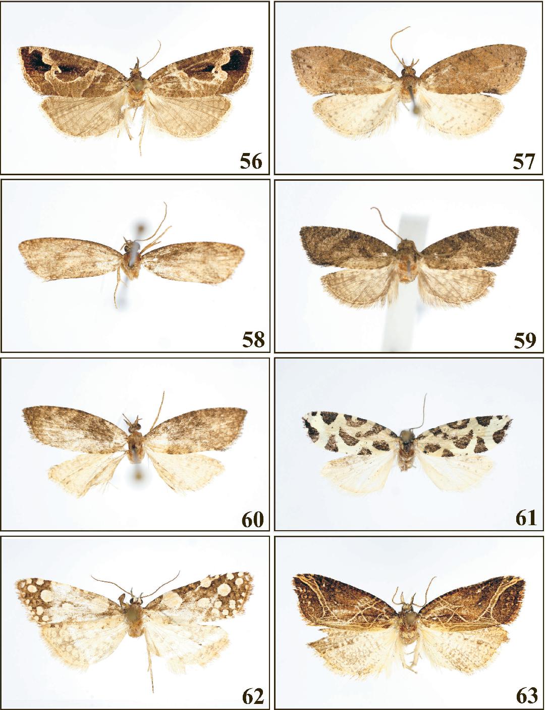figure 56-63