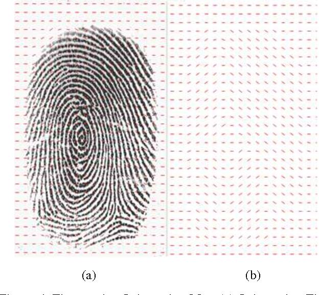 PDF] Fingerprint Core Point Detection Algorithm using