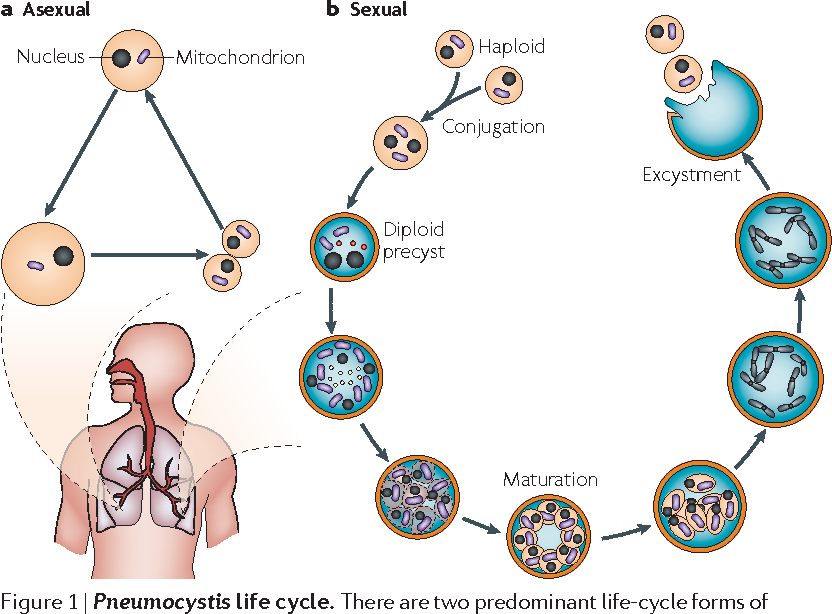 Current insights into the biology and pathogenesis of