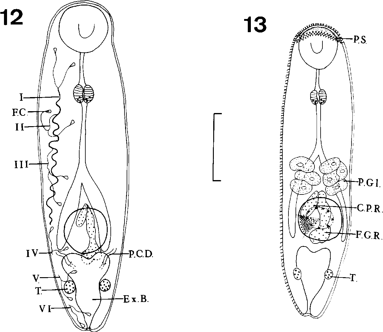 figure 12–13
