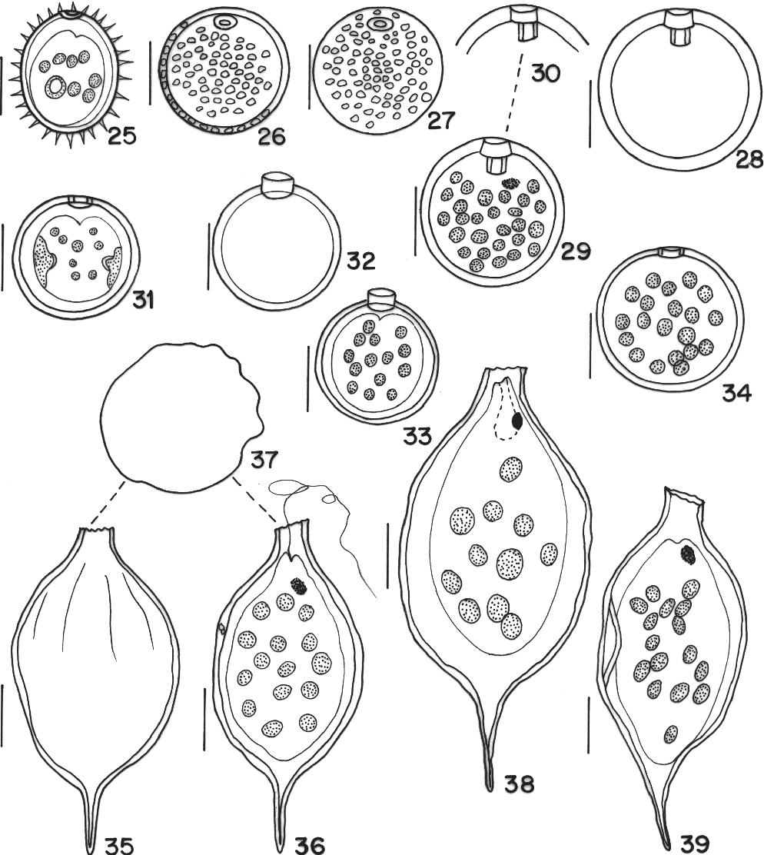 figure 25-39