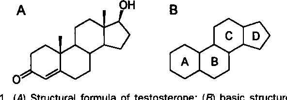 Figure 1 From Metabolism Of Anabolic Androgenic Steroids Semantic Scholar