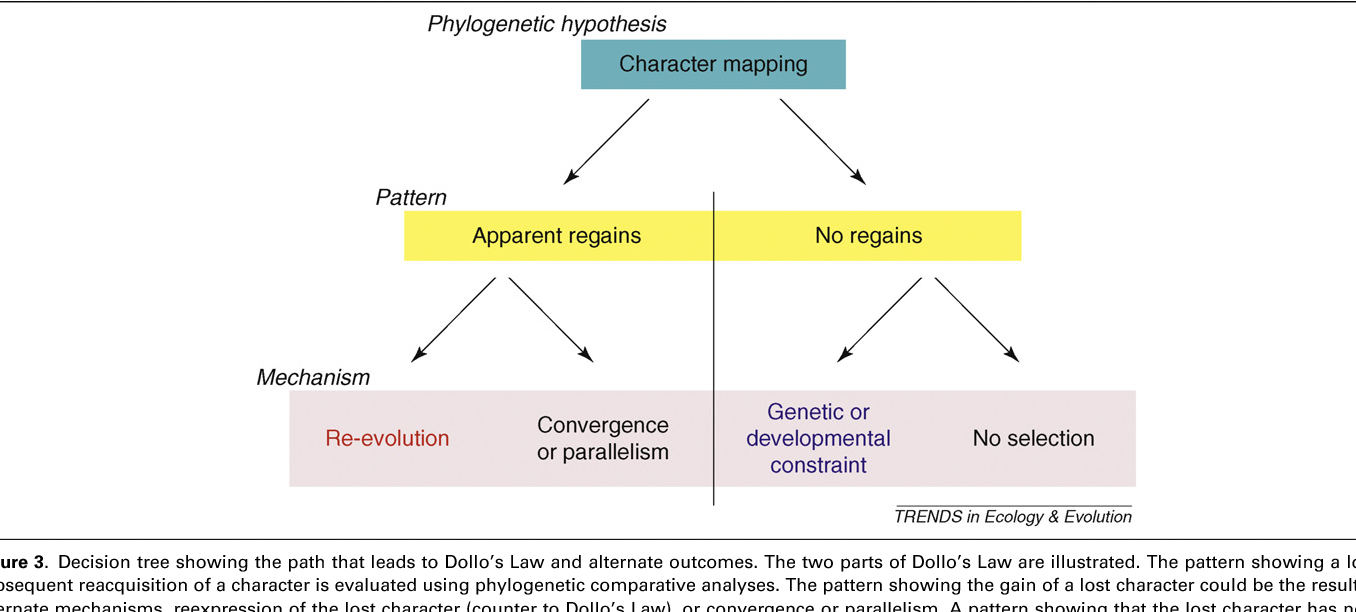 Figure 3 from Reversing opinions on Dollo's Law  - Semantic