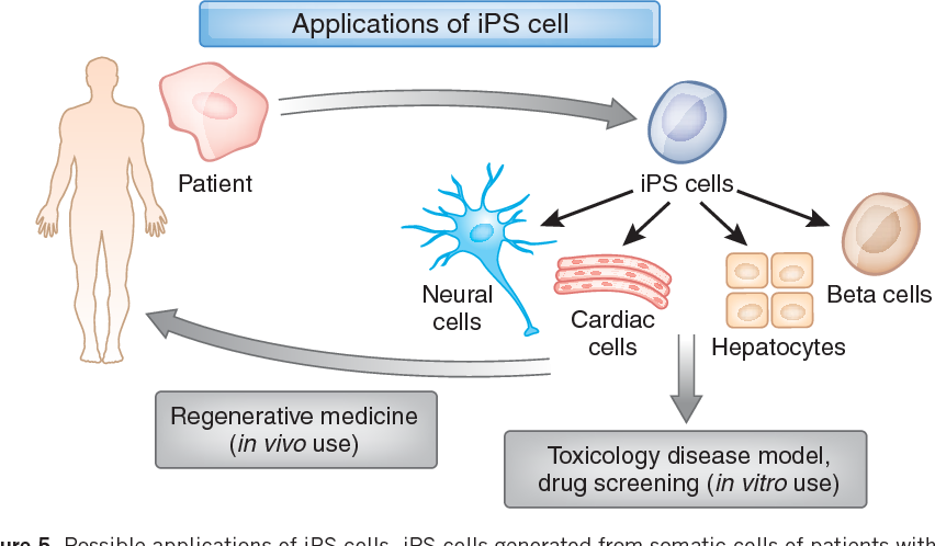 induced pluripotent stem cells disadvantages