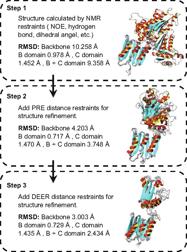 Figure 1 from Efficient long-distance NMR-PRE and EPR-DEER