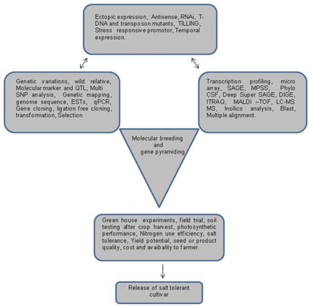 PDF] Salinity tolerance in plants: Breeding and genetic ... on gene editing, gene concept map, gene technology, gene identification, gene testing, gene science, gene cloning, gene biology, gene drawing, gene linkage,