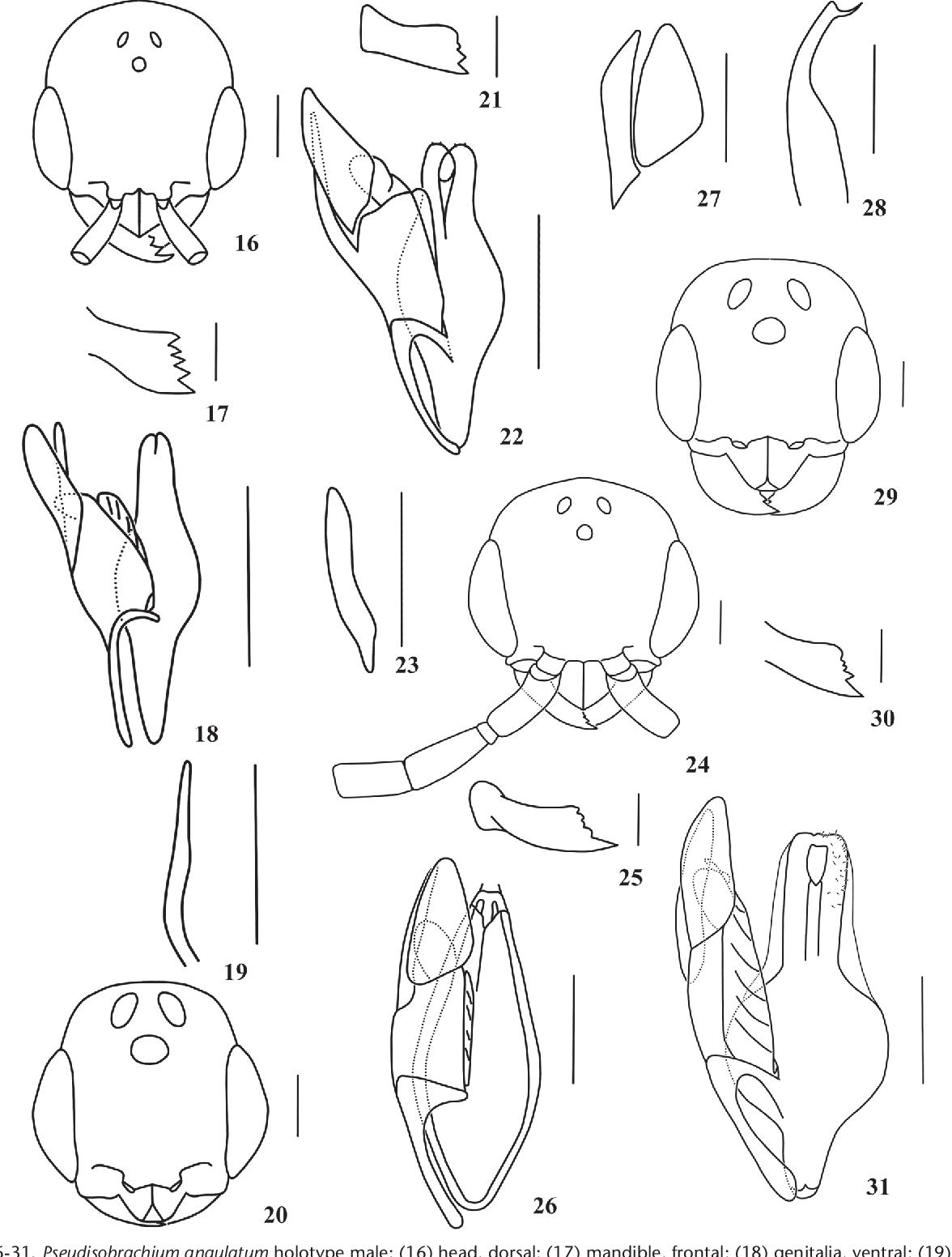 figure 16-31