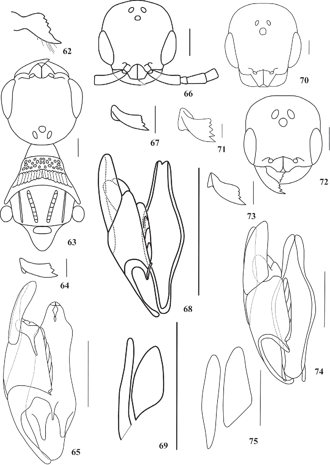 figure 62-75