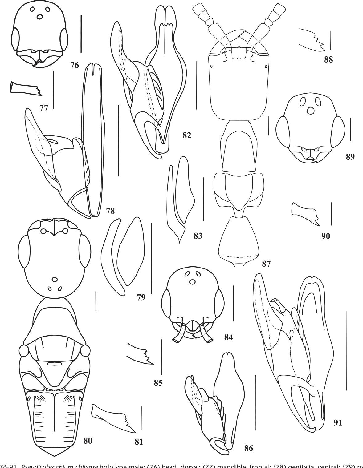 figure 76-91