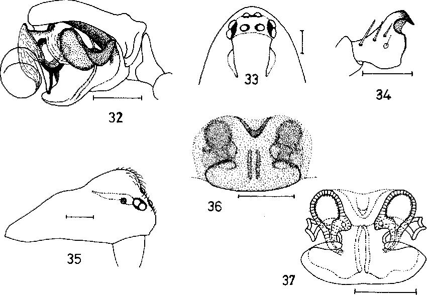 figure 32-37