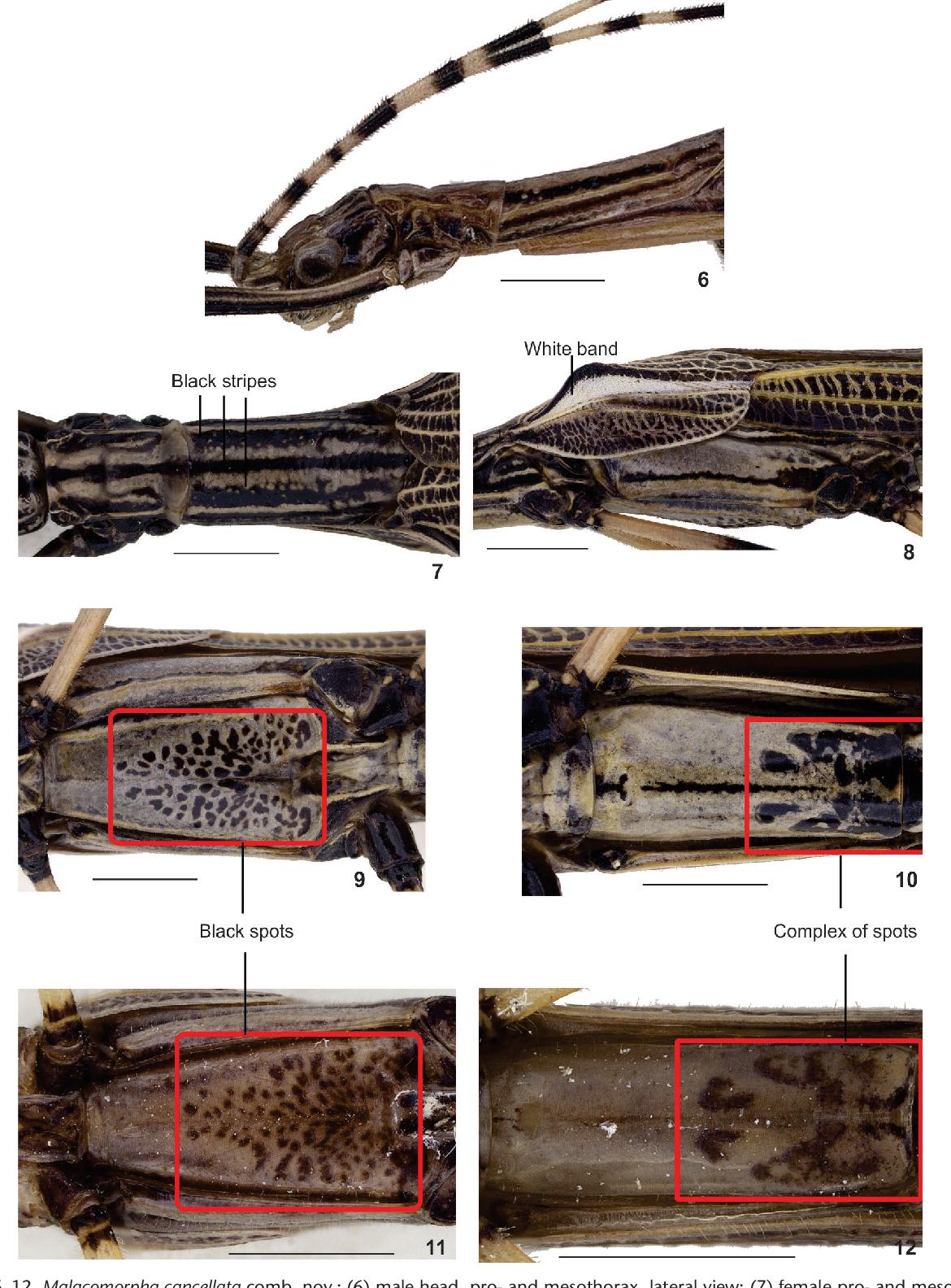 figure 6–12