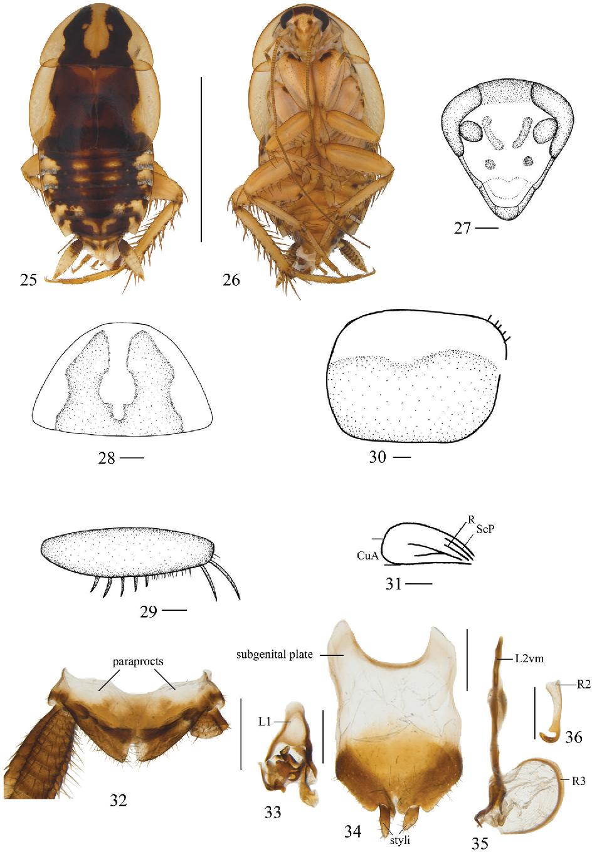 figure 25–36