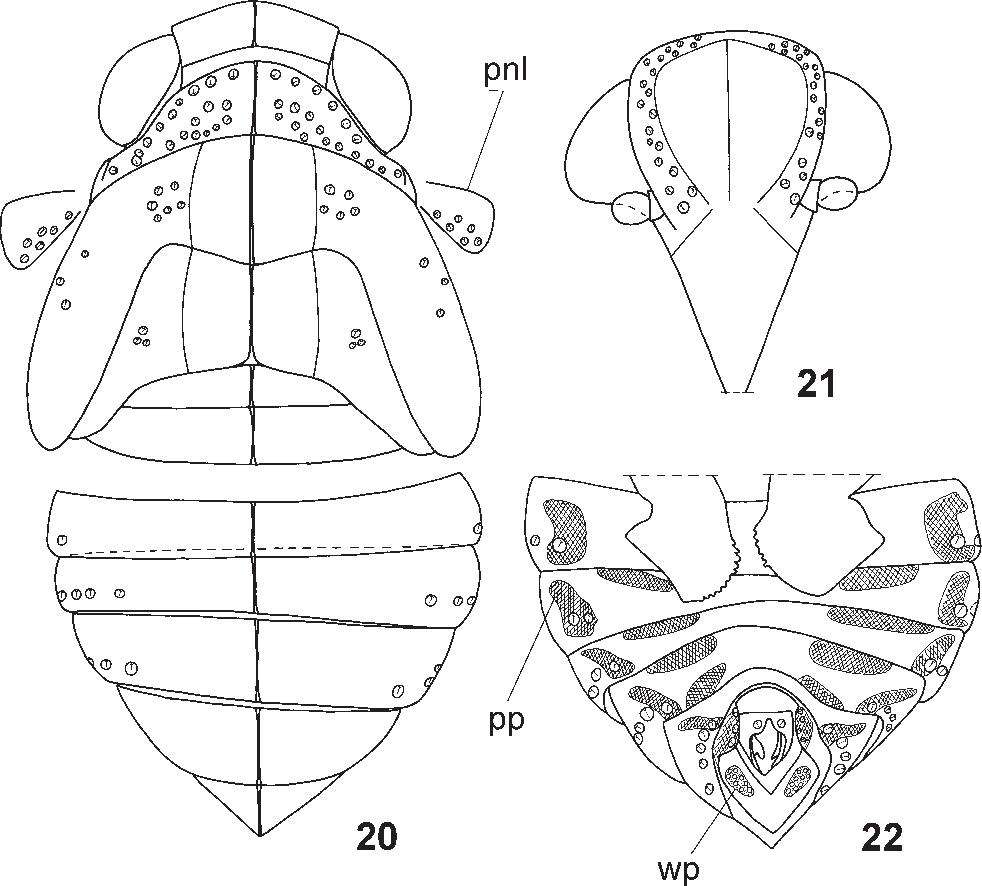 figure 20–22